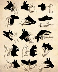shadow puppet guide: yay! all these years I've been eeking by with a sad butterfly & a rabbit/dog with no ears ... tonight there will be a menagerie in our house!