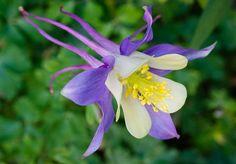 Bli kvitt maur Garden Of Eden, Planters, Gardening, Elegant, Flowers, Butterflies, Lily, Classy, Lawn And Garden