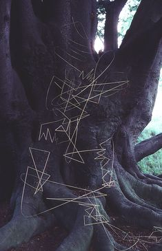 From the Andy Goldsworthy Digital Catalogue. Goldsworthy creates site-specific sculpture and land art. This example is a continuous grass stalk line  pegged to the ground and tree with thorns.
