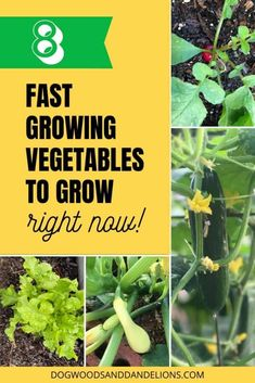 With the current situation, lots of people are wanting to start a garden. This list of fast growing vegetables will ensure you have some fresh produce in about a month from your backyard garden. Growing Green Beans, Growing Greens, Growing Vegetables At Home, Types Of Vegetables, Gardening For Beginners, Gardening Tips, Vegetable Garden Tips, Gardening Vegetables