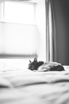 """* * """" Can'ts sleeps long - dat window's open and de fresh air beckons meez."""" Tap the link for an awesome selection cat and kitten products for your feline companion! Crazy Cat Lady, Crazy Cats, I Love Cats, Cute Cats, Gatos Cats, Photo Chat, Cat Photography, Here Kitty Kitty, Pets"""