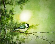 Chickadee Bird Photography Print Distressed by ChicksPhotoGraphics,