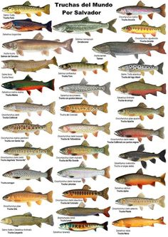 Trutas Nature Animals, Animals And Pets, Farm Animals, Trout Fishing, Fly Fishing, Fish Chart, Animal Plates, Fish Breeding, All Fish