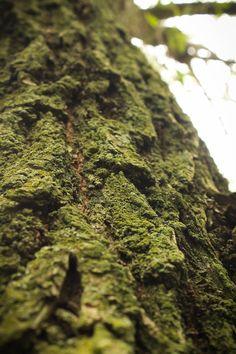 mossy tree macro - Hľadať Googlom Herbs, Australia, Wood, Woodwind Instrument, Timber Wood, Herb, Trees, Medicinal Plants