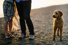:) We were thrilled when Vivian and Michael told us that they would like to have engagement photo session on the… Beach Engagement, Engagement Photos, Vancouver Beach, Little Dogs, New Friends, Photo Sessions, Photography, Little Puppies, Photograph