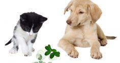 Kitten und Welpe Vitamine
