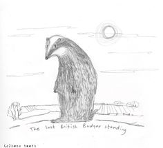 The last British Badger standing