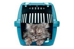 Wie bekomme ich meine Katze in die Transportbox - http://www.transportbox-katzen.de/wie-bekomme-ich-meine-katze-die-transportbox/
