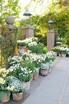 Container Gardening Ideas Beautiful french cottage garden design ideas 45 white bulbs mass planted in aged terracotta pots beautiful garden design Inspriation French Cottage Garden, Cottage Garden Design, French Garden Ideas, French Country Gardens, Country Garden Ideas, Simple Garden Ideas, Cheap Garden Ideas, Cottage Front Garden, Garden Pond Design