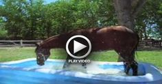Duke The Horse Discovers A Cool Kiddie Pool! : Video Clips From The Coolest One