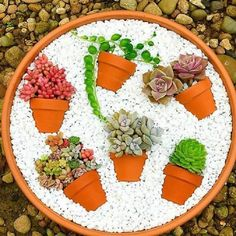 More Than 15 Deco Trend Small Colorful Diy Succulent Flower Garden Pot In ; Deco trend: Small colorful DIY succulent flower garden pot in pot Succulent Gardening, Succulent Pots, Garden Pots, Organic Gardening, Container Gardening, Gardening Tips, Succulent Ideas, Flower Gardening, Indoor Gardening