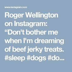 "Roger Wellington on Instagram: ""Don't bother me when I'm dreaming of beef jerky treats. #sleep #dogs #dogsofinstagram #yorkiesofinstagram #yorkielove #ilovemydog #yorkie"""