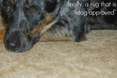 SmartStrand rugs are perfect for pets! Mohawk Rugs, Mohawk Carpet, Carpets, Tips, Animals, Design, Decor, Farmhouse Rugs, Rugs