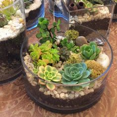 A few of us got together to make terrarium gifts for Teacher Appreciation week. Thank you for helping our children grow!❤️