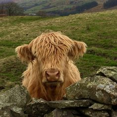 This photograph taken by Edith Richards near Lake Windermere in Cumbria.