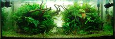 Layout par Asadar. #aquascaping #aquarium