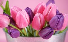 Pink and purple tulips flowers Wallpapers, Wallpaper 1920×1200