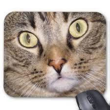 Resultado de imagem para olhos felinos