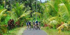 Bikereise Indonesien | Bali und Java per Bike entdecken | Biketeam Radreisen Bali, Sidewalk, Europe, Tours, Plants, Indonesia, Waterfall, National Forest, Travel