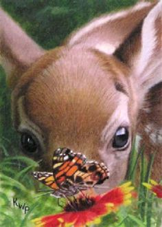 Fawn butterfly! cute-animals