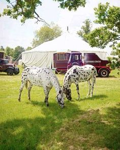 Our Animals — Giffords Circus Gourmet Marshmallow, Marshmallow Snowman, How To Make Marshmallows, Circus Acts, Bbc World Service, Horse Posters, Best Photographers, Family Travel, My Best Friend