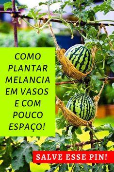 Comment Planter, Diy Greenhouse, Bonsai, Gardening Tips, Homesteading, Planters, Backyard, Fruit, Vegetables