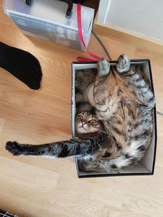 40 Of The Absolute Best 'If I Fits, I Sits' We Saw in 2017
