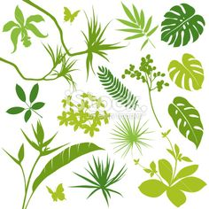 picture of tropical leaf | Tropical Leaves Royalty Free Stock Vector Art Illustration