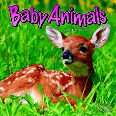 December 2013, Large Format, Baby Animals, Dates, Calendar, Photographs, Contemporary, Studio, Birthday