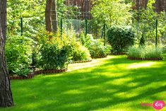 19 roślin, które będą rosły w zacienionych miejscach! - Twoje DIY Bonsai, Stepping Stones, Diy And Crafts, Pergola, Sidewalk, Outdoor Decor, Sad, Gardening, Stair Risers