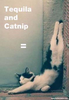 Cat Trip.