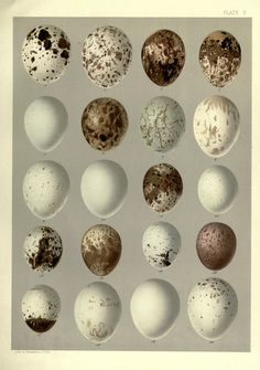 Life histories of North American birds - Biodiversity Heritage Library