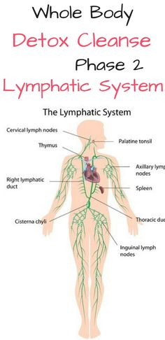 The Lymph System Natural Remedies Articles Amp Research