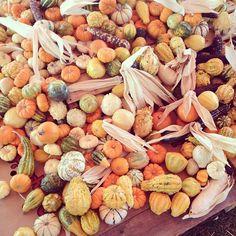 """Autumn #textures"" Photo taken by @kalonstudios on Instagram (10/26/2013)"