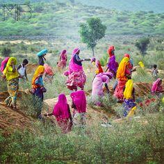 iINDIA: women is glorous color sprees . Rajasthan