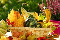 Ještě jste nezazimovali stůl na terase či v pergole? Mísy s ozdobnými plody a listy mu budou sedět.