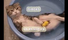 Gatos odeiam água, é impossível dar banho neles. | 18 motivos para você nunca ter um gato