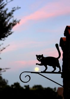 As I was walking all alone... Cat playing with the moon :) by Morgane Orizet