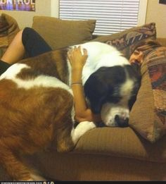 This dog who is definitely hogging the couch. | 21 Dogs Who Don't Realize How Big They Are