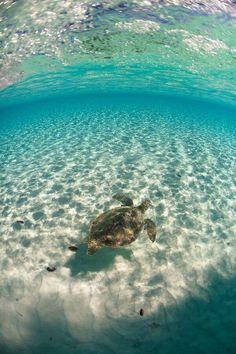 touch in the Sea Turtle in the Bahamas and see her going! Dream Vacations, Vacation Spots, Places To Travel, Places To See, Jolie Photo, Ocean Life, Ocean Beach, Marine Life, Sea Creatures