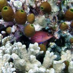 Best Dive Sites the U.S. Virgin Islands