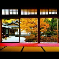 choujuji by hanabi. on Flickr.