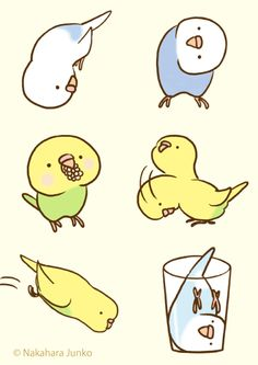 """Budgies Fickle"" LINE Sttickers from http://line.me/S/sticker/1085043"