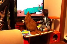 Baby and cat watch a Rube Goldberg machine together. So delightful!