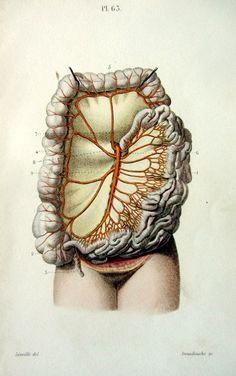 1852 Antique anatomy print vintage engraving by LyraNebulaPrints, $29.95