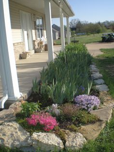 My Iris beds in front of my house. pretty, I have gobs of iris, want some?