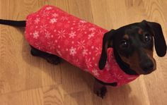 This is LOLA! She's all ready for Christmas in her CHRISTMAS SNOWFLAKES JUMPER http://www.simplyspiffingdachshunds.co.uk/product-category/christmas-collection/