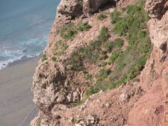 Plant colony on cliff face