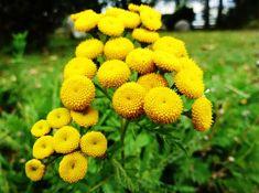Home Garden Plants, Herbs, Fruit, Health, Nature, Gardening, Magick, Diet, Naturaleza