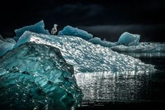 Petersburg, Alaska, United States. Icescape by Kelly King. As the majority of the glaciers in the world continue to melt, large chunks of ice float out into the surrounding channels. The ice under water melts faster than on the surface, as it's density changes the ice flips over and reveals beautiful patterns of glass-like sculptures. The gulls, Kittiwakes and other seabirds use these floaters to rest and spot food. Although it looks like night this photo was taken in the late morning hours…